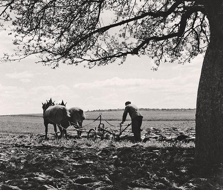 Pflügen mit Pferdegespann