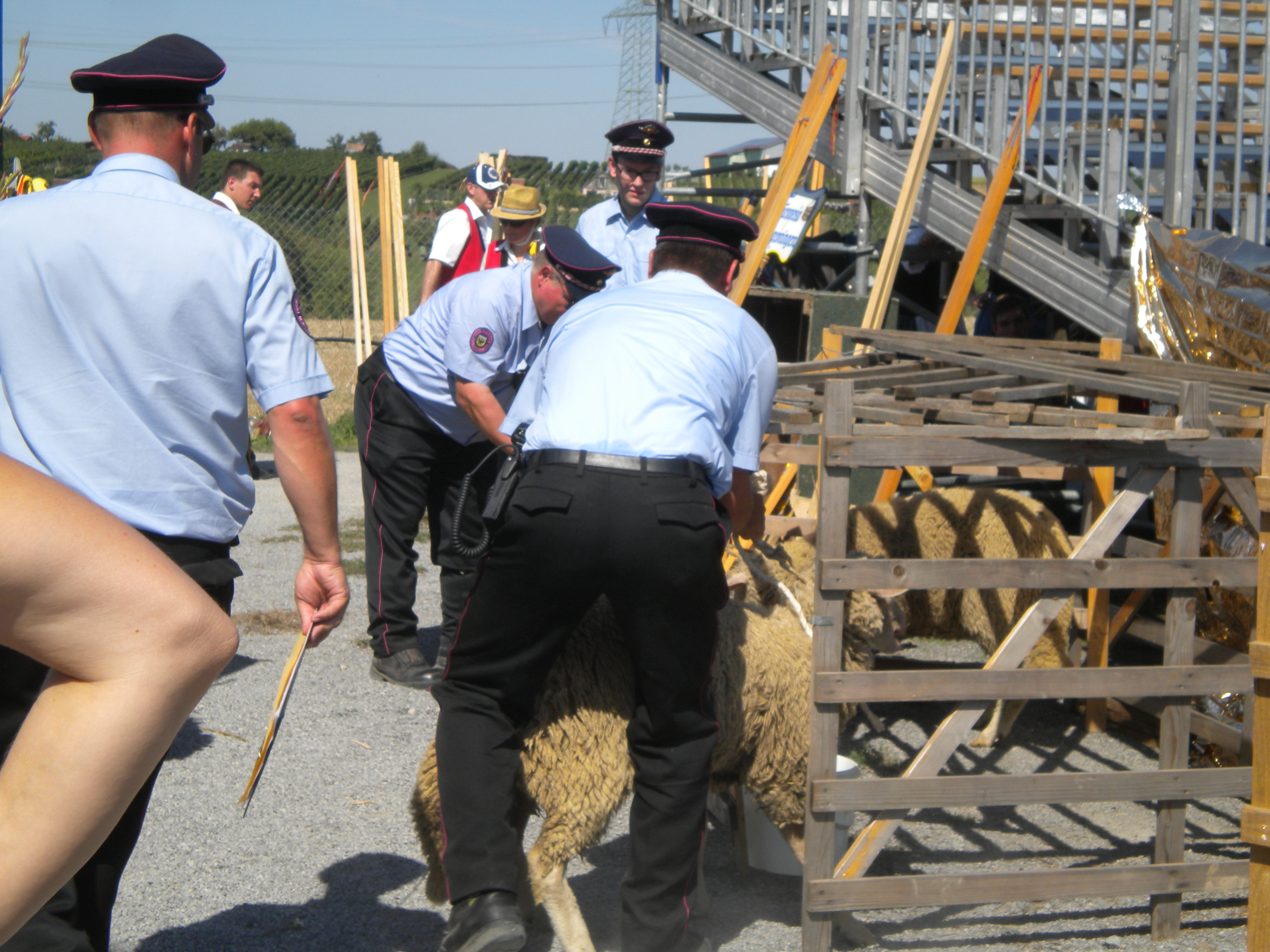 Feuerwehr Schafe